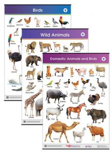 Domestic and Wild Animals & Birds Charts for Kids | Jumbo Size with Names in English