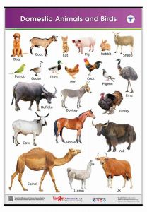 Animals and Birds Learning Chart
