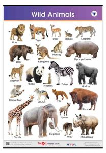 Wild Animals Chart for Kids | Jumbo Size with Animal Names in English
